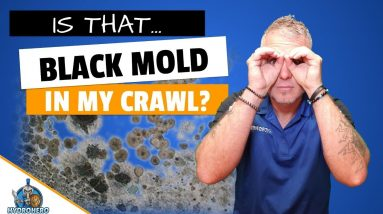 Mold Inspection Found Toxic Black Mold In The Crawl Space